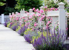 ogród różowy szałwia omszona róże białe ogrodzenie