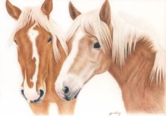Custom Pet Portrait with colored pencils - Commission pet portrait - 2 animals Colored Pencil Artwork, Color Pencil Art, Colored Pencils, Bunny Art, Polychromos, Reproduction, Illustrations, Wildlife Art, Horse Art