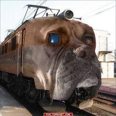Dog Train.