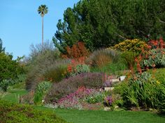 Slope planted with South African natives: Aloes, Leucospermum, Leucadendron.