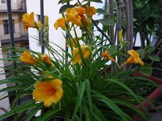 evelok_erkelyre5 Gardening, Plants, Lawn And Garden, Plant, Planets, Horticulture