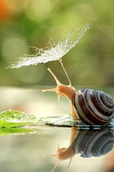 25 shots this #photographer took of a creature we seldom think about. #Photography #nature #Snails #Macro
