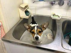 Mini Foxie bath time