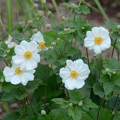 150 Best White Flowers For My Garden Images White Flowers