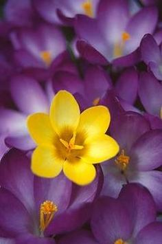 18 Ideas Flowers Purple Yellow Colour For 2019 Complimentary Colors, Purple Aesthetic, Mellow Yellow, Purple Yellow, Violet, My Favorite Color, Color Combos, Flower Power, Beautiful Flowers
