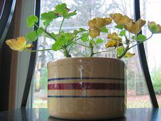 Cum se face altoirea cu ramură detașată, sub scoarța terminală Plantar, Paradis, Salvia, Planting Flowers, Beautiful Flowers, Planter Pots, Home And Garden, Dessert Boxes, Spin