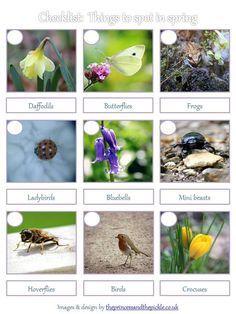 Checklist: Spotting the signs of spring in the garden.