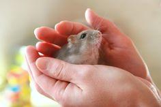 KDYŽ ZACHRÁNÍTE MALIČKÝ ŽIVOT... | Hrajeme si jinak křeček, hamster