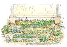 This simple rainwater-harvesting system will put the water where your plants need it most.  Illustration by Elayne Sears. From MOTHER EARTH NEWS magazine.