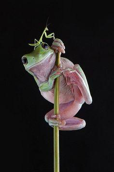 @pinkpanther3434  Günaydın,dost...:) Mutlu,neşeli,aydınlık bir hafta dilerim... pic.twitter.com/Eg9LnwCheq