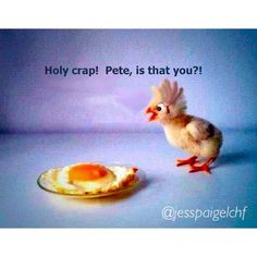 Happy Easter Bunny Humor and Funny Easter Jokes! Funny Easter Jokes, Funny Jokes, Silly Jokes, Video Humour, Easter Quotes, Easter Sayings, Bunny Quotes, Snoopy Quotes, I Love To Laugh