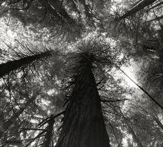 """Kings Canyon Sequoias, Sierra Nevada, California, US, 2004 by photographer Beth Moon Beautiful Dark Twisted Fantasy, Dark And Twisted, John Muir, Sierra Nevada, Dragon Blood Tree, Le Baobab, The Doors Of Perception, Tree Woman, Photo Portrait"