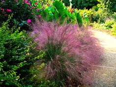 Elegant ornamental grasses for growing in any garden - Konkrete Patio Formen - Garten Deko Backyard Pool Landscaping, Tropical Landscaping, Landscaping With Rocks, Backyard Landscaping, Landscaping Ideas, Landscaping Edging, Shade Perennials, Shade Plants, Pool Plants