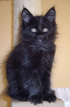 Oh my goodness, look at that face! what a cutie! Black cats bring good luck & l<3ve.
