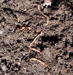 Soil Biology Basics