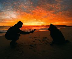 Photo of the Day! Bribing Goofy with treats is the only way @crafafidalgo got his pup to stay still for this sunset banger! #GoPro #GoProPets #🌞#Portugal🇵🇹