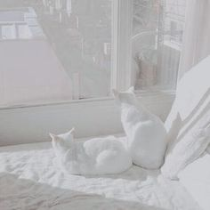 43 Trendy Ideas For Cats White Aesthetic Pale Aesthetic, Rainbow Aesthetic, Black And White Aesthetic, Aesthetic Colors, Aesthetic Photo, Aesthetic Pictures, Aesthetic People, Aesthetic Grunge, Aesthetic Vintage