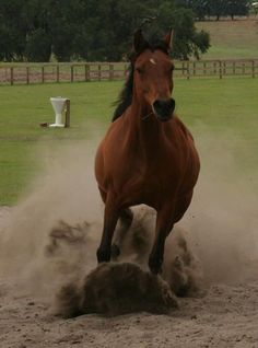 The swirl of dust around pounding hooves... (Angel)