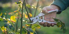 Κλάδεμα Τριανταφυλλιάς Crafts Beautiful, Garden Tools, Beautiful Pictures, Home And Garden, Backyard, Nature, Flowers, Seeds, Gardening