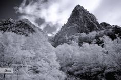 Trees and rock-mountain - Pinned by Mak Khalaf Landscapes black and whitecloudsmountainrockskytrees by IchiroMurata