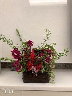 紅 Plants, Plant, Planets