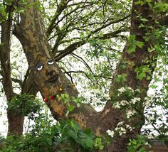 Zonenkinder Collective paints faces to highlight the grotesque and humorous faces they see on trees.