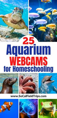 Do you find yourself suddenly homeschooling/ Remote Learning/ Distance Learning and need more activities to keep your kids busy? Check out this list of 10 Aquarium Webcams For Homeschooling that are sure to make your kids excited about learning. Educational Activities, Learning Activities, Preschool Activities, Kids Learning, Educational Websites, Ocean Activities, Teaching Ideas, Virtual Field Trips, Business For Kids
