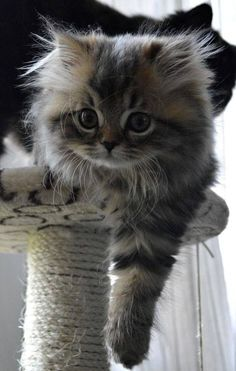 """""""Time for an extremely cute kitten…"""" That is an EXTREMELY cute kitten!"""