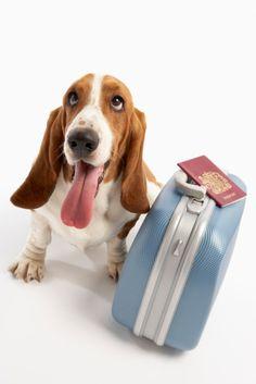 Comenzamos viaje en 3, 2, 1....    Viajá con Avantrip!  #Avantrip #Viajar #Viaje #Animales #Animal #Animaladas #Viajeros #Travel #Mundo #Naturaleza #Conocer #Vintage #Perro #Dog #Dogs #Perros
