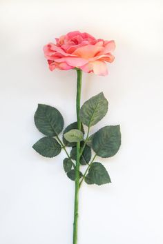 FIVE 24 Sophia Rose Stems with Leaves for by wholesalefloral