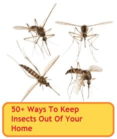 50+ Ways To Keep Insects Out Of Your Home