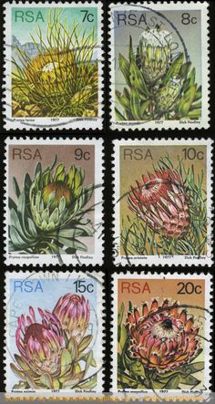 1977 South Africa, Protea definitive stamps values from This third set for the republic was designed by Dick Findlay. Stamp Values, South Afrika, Out Of Africa, My Land, African History, Stamp Collecting, Cape Town, Postage Stamps, Flora