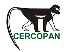 CERCOPAN is a primate conservation charity based in Nigeria. They do great work rescuing orphaned primates from the pet trade and rehabilitating them for release in to the forest. They work with local communities to protect expanses of forest, and improve the lives of people reliant upon forest resources. Find them on facebook or at www.cercopan.org