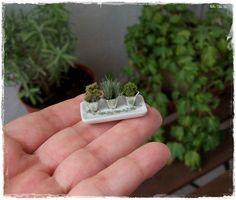 KITCHEN HERBS dollhouse miniature by Soraya Merino - can totally do this.