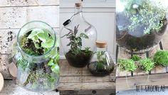Als kind was ik al gefascineerd door de planten in de grote fles die bij vrienden van mijn ouders op een tafel naast de bank stond. Ik kon daar uren naar kijken. De herinnering was eigenlijk weggezakt tot ik voor het maken van het boek 'het Plantenlab' voor de mensen die echt al hun planten …