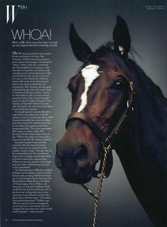 Zenyatta, the Queen of Racing and arguably the most talented to ever grace the track.