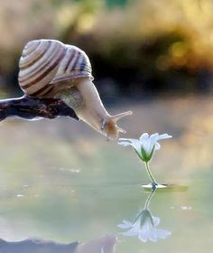 Google+ Passionate People, Close Up Photos, Animal Kingdom, Cute Animals, Nature Photography, In This Moment, Studio, Beautiful, Snails