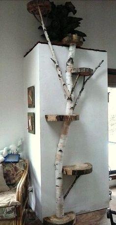 Bildresultat för bygga katträd