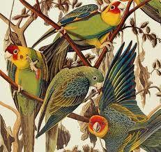Risultati immagini per John James Audubon Audubon Prints, Audubon Birds, Bird Artists, Nature Artists, Nature Illustration, Botanical Illustration, Motifs Art Nouveau, John James Audubon, Vintage Drawing