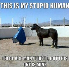 Horse's - Horses Funny - Funny Horse Meme - - Horse's The post Horse's appeared first on Gag Dad. Funny Horse Memes, Funny Horse Pictures, Funny Horses, Cute Horses, Horse Love, Horse Humor, Funny Pics, Funny Memes, Funny Animal Jokes