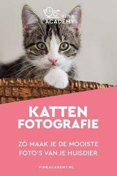 Fotografie tips voor katten; leer hoe je de mooiste kattenfoto's maakt. Het fotograferen van je huisdier is niet altijd makkelijk. Welke instellingen heb je nodig? Hoe voorkom je overbelicht of onderbelichting bij een witte of donkere vacht? Hoe trek je de aandacht van je kat of hond? Allemaal vragen die in dit Nederlands gescheven artikel beantwoord worden. Naast de fototips voor katten en kittens krijg je dus ook tips voor hondenfotografie #kattenfotografie #huisdieren