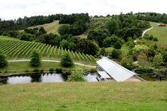 Brick Bay Winery Matakana NZ - a wonderful part of New Zealand  to holiday