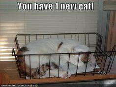You have 1 new cat