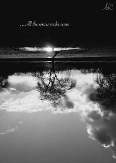 All The Senses Make Sense  © L'Air de Cat  #Reflection#UpsideDown#LookFurther#Photography#Thought#Sky#Earth#Tree#Nature#Sunlight#L_air_de_cat  Tous les sens ont un sens #Reflet#EnversEndroit#Regardeplusloin#Photographie#Pensée#Ciel#Terre#Arbre#Nature#Rayondusoleil