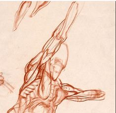 Weston's detailed study of muscle and form.