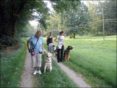 How to Train Your Dog to Calmly Walk on Leash - Whole Dog Journal Article