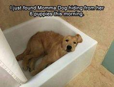 awwww....I feel so bad for mommy dog...