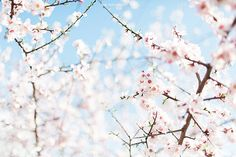 hello spring!   Flickr - Photo Sharing!