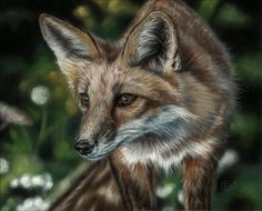 Pastel Drawing by Emma Colbert