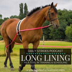 Using Long Lining as a Tool in Your Riding - Strides for Success Equestrian Boots, Equestrian Outfits, Equestrian Style, Horse Information, Types Of Horses, English Riding, Camping Supplies, Horse Training, Training Tips